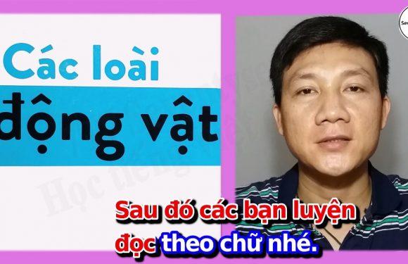 Học từ vựng tiếng Việt – Các loài động vật