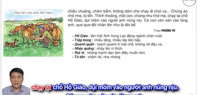 Đàn bê của anh Hồ Giáo – Lớp 2 – Tuần 34 – Trang 136 – Tiếng Việt 2 tập 2