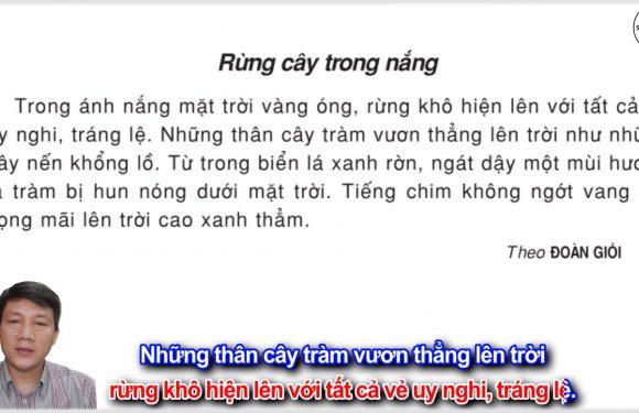 Rừng cây trong nắng – Lớp 3 – Tuần 18 – Trang 148 – Tiếng Việt 3 tập 1