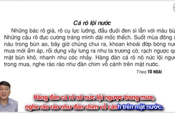 Cá rô lội nước – Lớp 2 – Tuần 27 – Trang 80 – Tiếng Việt 2 tập 2 – Ôn tập giữa kỳ 2